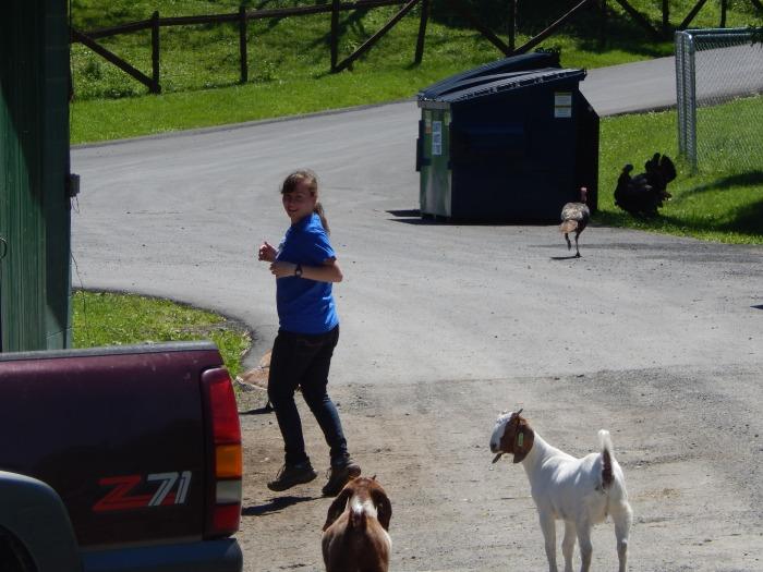 catskill-animal-sanctuary-goats