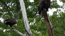 Eagles-NY